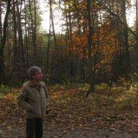 В осеннем лесу :: Николай Мезенцев