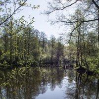 Утро над речкой. :: Андрей Чиченин