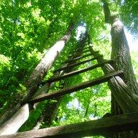 лестница в небо :: Samadhi Om