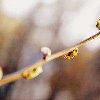 весна :: валентина Чемякина