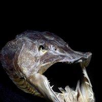 страсти по рыбалке :: Игорь Чубаров