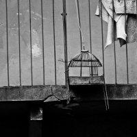 Клетка есть, а птицы нет... :: Анастасия Матвиец