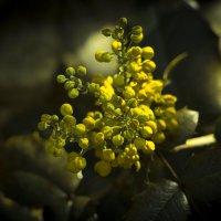 Цветок :: Дмитрий Колесников