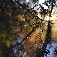 Зима :: Анастасия Алексеева