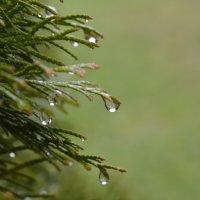 после дождя... :: Андрей Вестмит