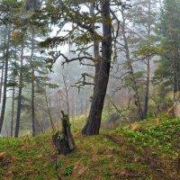 Таинственный лес балагана Ветреного :: Вадим ZUBR Малышев