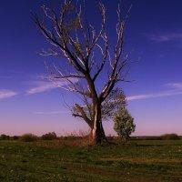 мертвое дерево :: Вадим Виловатый