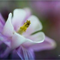 цветок :: yameug _