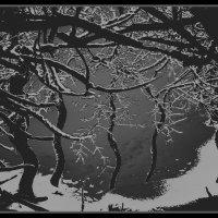 """Зимний этюд.""""Лесная тропинка""""(Удивительное рядом.) :: Виталий Виницкий"""