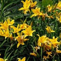 Майские цветы  Ботанического сада :: Владимир Бровко