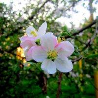 Весна :: Милагрос Экспосито