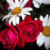 Розы и ромашки :: Татьяна Королёва