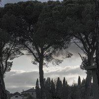 Дерева :: Людмила Синицына
