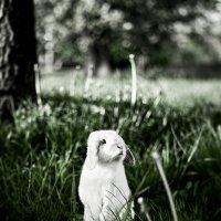 Rabbit :: Антон Кравцов