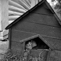 ...кошкин дом... :: Ольга Нарышкова