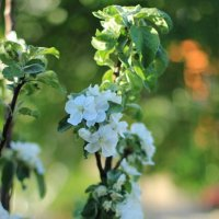 весна :: Vera Alyamova