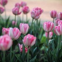 Цветы. :: Nonna