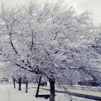 Зимняя весна в апреле... :: Полина Николаева