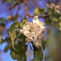 Цветы на закате 2 :: DmitryLis