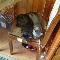 После мыше-трудодня.. :: Kathy Bespalova