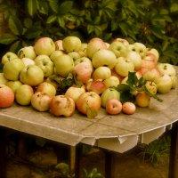 Яблочная симфония :: Kathy Bespalova