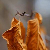 ***осень/листья :: Сергей Шаврин