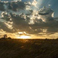 Солнце встало :: Игорь Кузьмин