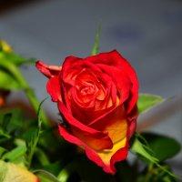 Роза :: Роман