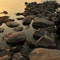 Птичий пляж :: Дмитрий Близнюченко