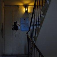 Никто не виноват, что чёрный Кот теперь играет вечно с нами в прятки :: Ирина Данилова
