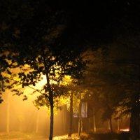 дождливый вечер :: Анна Череватая