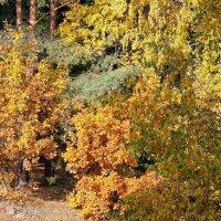 Осенний теплый день :: Irina