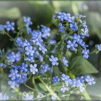 Голубая мечта :: ЛЮБОВЬ ВОЛГИНА