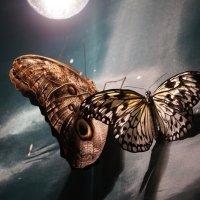 Бабочки :: Николай Варсеев