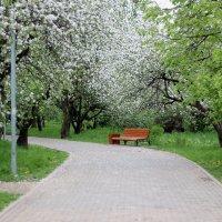 В парке... :: Инна Чеботарёва
