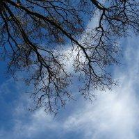 Два символа: Дерево и Небо. :: Владимир Гилясев