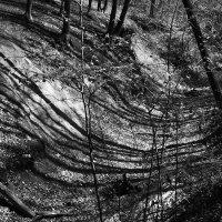 Трели,тени и деревья. :: Алина Тазова