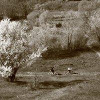 Проезжая по Весне. :: Алина Тазова