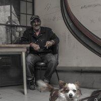 Собачья жизнь в Умбрии :: Людмила Синицына