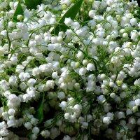 Белое с таким запахом! :: Наталья