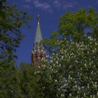 весна? :: Андрей Денисов