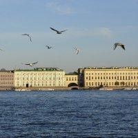 Чайки над Невой :: Андрей Вестмит