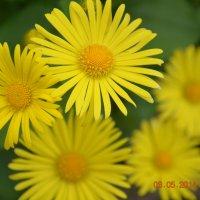мамины цветы :: Ольга Ершова
