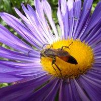Астра и очередное насекомое :: Диана Одинцова