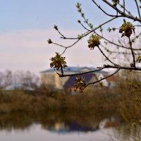 Весна :: Анастасия Гладкова