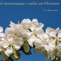Каждый год фотографирую и каждый раз в восторге:-) :: Юра Викулин