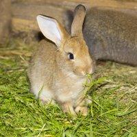 Кролик :: ViP_ Photographer