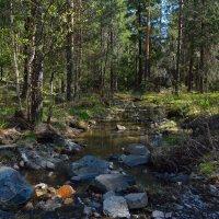Лесной ручей :: vladimir Bormotov