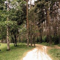 Лесной путь :: Chera -
