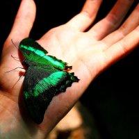 Бабочка :: Stepan Kazakov
